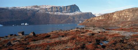 Harefjord, Scoresby Sund, Greenland